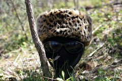 `Cosmopolitan` deep woods fashion by ZDS. This 6000 x 4000 HD unretouched photo depicts a mannequin head with sunglasses and a fur hat in the deep woods of Royalty Free Stock Photo