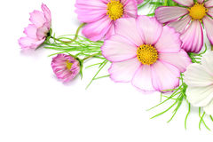 Cosmos Images stock