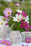 Cosmos. Flowers of cosmos in vase Stock Photography