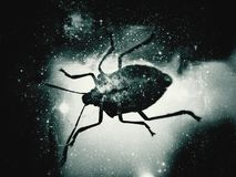 Cosmos bug. Chinch and galaxy Royalty Free Stock Photos
