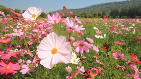 Cosmos field. stock footage