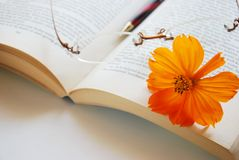 Cosmos flower and book Stock Photography