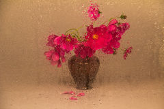 Cosmos flower (Cosmos bipinnatus) Stock Photography