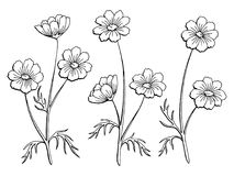 Cosmos flower graphic black white isolated sketch illustration vector Fotos de archivo