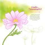 A cosmos flower on a green watercolor background. The flowers in the botanical style, minimalistic design. Place for the inscription. Hello summer Stock line stock illustration