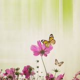 Cosmos Flower With Paper Background Royalty Free Stock Photography