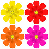 Cosmos flower set Royalty Free Stock Image