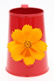 Cosmos flower in a watering can. Cosmos flower and spout of a watering can Stock Images