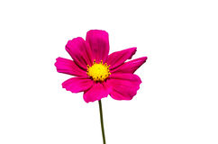 Cosmos Royalty Free Stock Images
