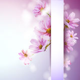 Cosmos flowers background. Stock Images