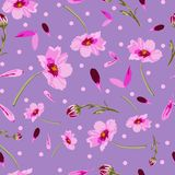 Cosmos Flowers and Dots-Flowers in Bloom, seamless repeat pattern stock illustration