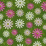 Cosmos flowers field seamless pattern. Vector illustration Stock Photos
