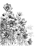 Cosmos flowers. Hand drawing. Garden background royalty free illustration