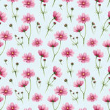 Cosmos flowers illustration Stock Images