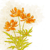 Cosmos flowers on textured background. Vector drawn cosmos flowers on textured background in watercolor style Royalty Free Stock Images