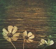 Cosmos on grunge wood Royalty Free Stock Photos