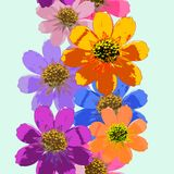 Cosmos, Kosmeya. Seamless pattern texture of flowers. Floral   Royalty Free Stock Images