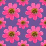 Cosmos. Seamless pattern texture of flowers. Floral background,. Cosmos. Texture of flowers. Seamless pattern for continuous replicate. Floral background, photo Royalty Free Stock Photography