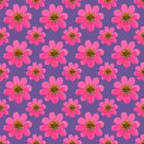 Cosmos. Seamless pattern texture of flowers. Floral background,. Cosmos. Texture of flowers. Seamless pattern for continuous replicate. Floral background, photo Royalty Free Stock Photo