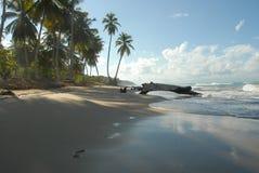 Coson 2 de Playa Foto de Stock Royalty Free