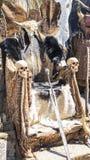 Cosplay,毛皮和头骨王位有北欧海盗剑的 椅子wi 库存图片