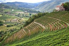 Cossano Belbo (山麓,意大利) 库存照片