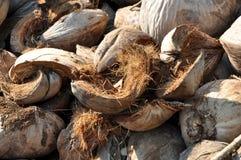 Cosse Brown de noix de coco velu Photographie stock libre de droits