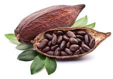 Cosse de cacao Image stock