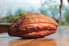 Cosse de cacao Images libres de droits