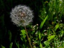 Cosse de graine dans l'herbe image libre de droits