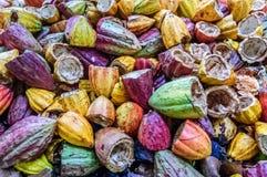 Cosses colorées et vides de cacao, Guatemala photographie stock