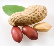 cosses d'arachide Image stock