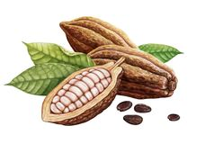 Cosses de cacao, graines de cacao et feuilles illustration libre de droits