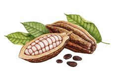 Cosses de cacao, graines de cacao et feuilles illustration stock