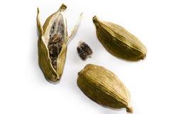 Cosses de cardamome Image stock