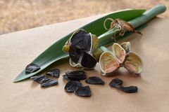 Cosses de graine d'Amaryllis et une feuille verte Photo stock