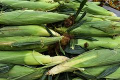 Cosses de maïs fraîches sur le Tableau à un marché de légumes image libre de droits
