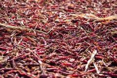Cosses de poivron rouge Images stock