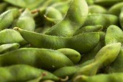 Cosses de soja d'Edamame photographie stock libre de droits
