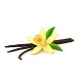 Cosses de vanille avec la fleur sur le fond blanc Photo stock