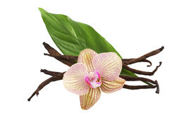 Cosses et fleur de vanille photographie stock