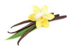 Cosses et fleur de vanille d'isolement Photographie stock