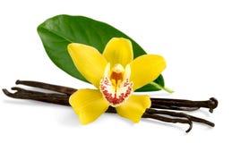 Cosses et fleur de vanille d'isolement sur le blanc photos stock
