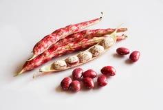 Cosses rouges de haricot sec d'isolement sur le blanc image stock