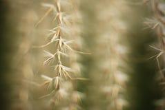 Cosses sèches de fleur Photographie stock libre de droits