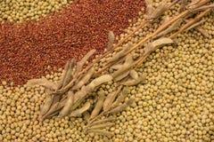 Cosses sèches de soja s'étendant sur une pile des haricots de soja images stock