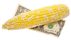 Cost of Corn Royalty Free Stock Photos