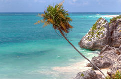 Cost of Tulum - Mexico Royalty Free Stock Photography