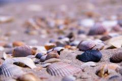 A costa é coberta com os vários shell Fotografia de Stock