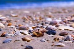 A costa é coberta com os vários shell e oceano no fundo Foto de Stock Royalty Free
